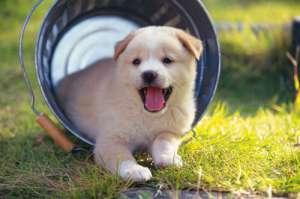 犬结核病的症状有哪些?