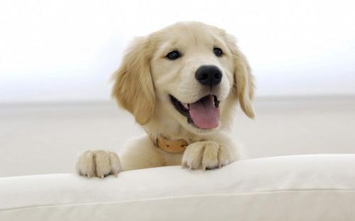 养宠知识:狗狗感冒了怎么办?