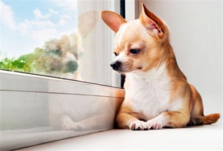 养宠知识:狗狗发烧的症状与治疗