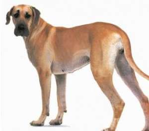 犬结核病的病因与治疗方法?