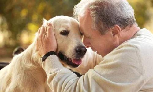 养宠知识:怎样让狗狗安度晚年?