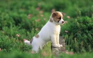 狗狗食物中毒后的急救办法?