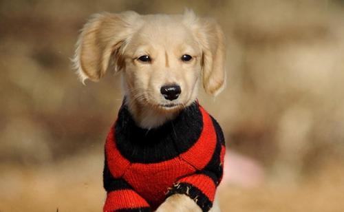 狗狗食物中毒后需要处理的方法?