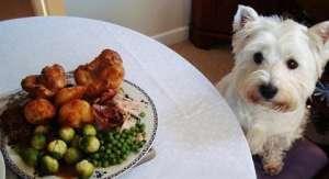 防止狗狗食物中毒,常见的6大要点你要知道?