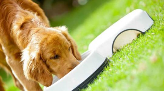 如何防治狗狗的蛔虫病?