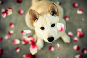 犬蛔虫病症状及防治措施