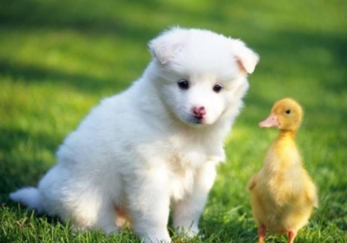 养宠知识:如何让狗狗吃得更健康?
