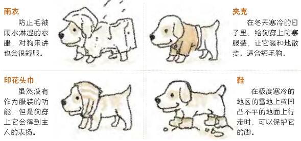 对狗有用的衣服