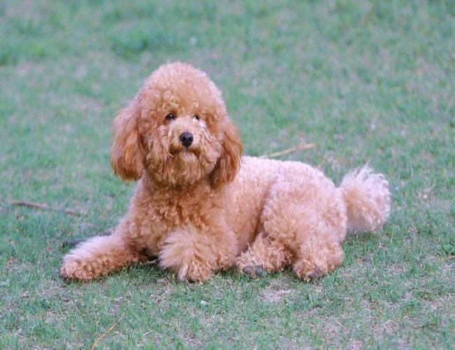 养宠知识:狗狗打喷嚏的几个原因?