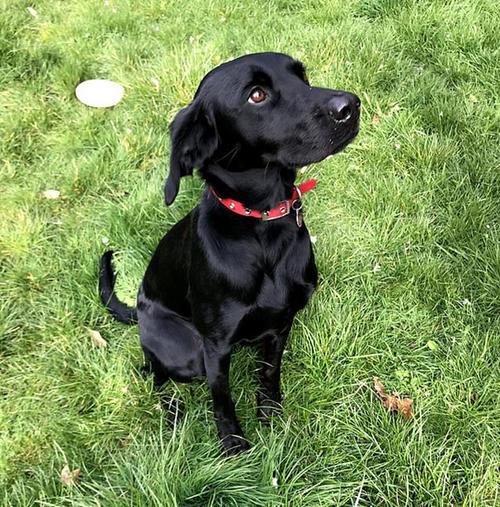 狗狗得了肠炎怎么办呢?