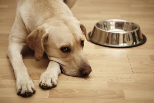 犬的肠便秘成因与防治