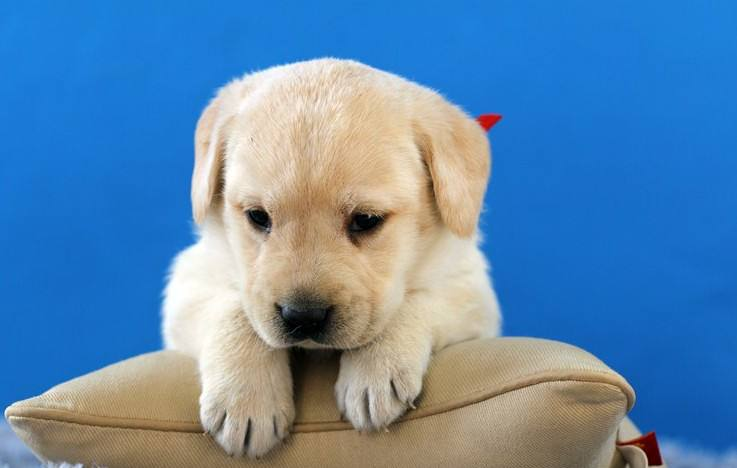 养宠知识:如何给宠物狗清洗眼睛