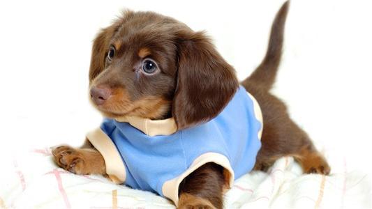 养宠知识:如何避免宠物狗深夜乱叫?