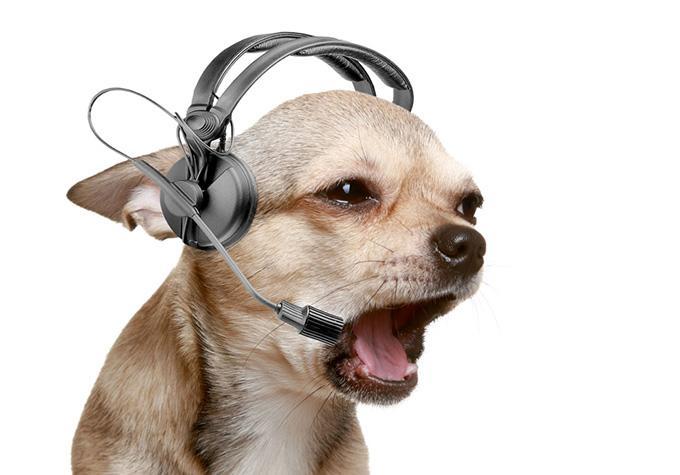 狗狗疥螨病原因和治疗?