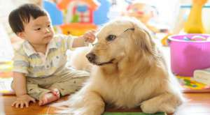 养宠知识:狗狗训练最好的时期你知道吗?