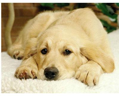 美国狗证上的7句话(看到最后,泪流满面)