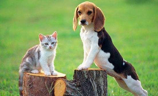 狗应该小心弓形体病。