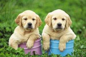 犬弓形体病的症状及防治?