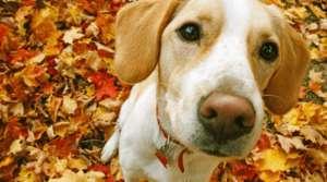 狂犬病的症状是什么?