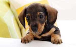 狗狗牙周炎是哪些原因引起的?