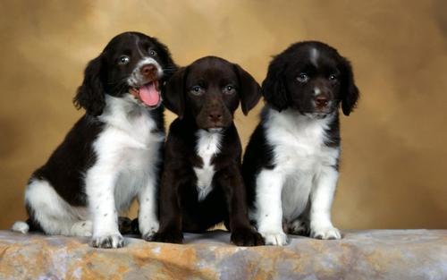 养宠知识:刚买的狗狗不吃饭怎么办?