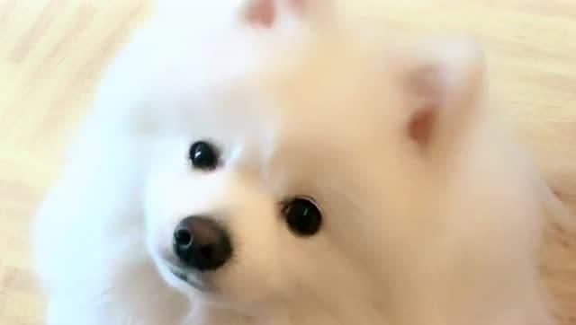 养宠知识:为何你家狗狗会肥胖?