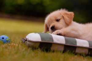 养宠知识:如何让狗狗乖乖吃药呢?