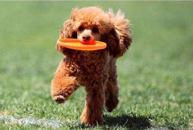 养宠知识:让狗狗接受陌生人触摸的训练