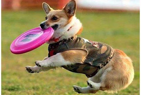 养宠知识:狗狗拆家的坏习惯该如何管教?