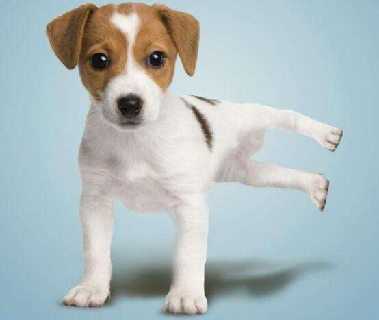 养宠知识:狗狗的力量训练?