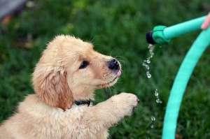 狗狗食管炎的症状与防治?