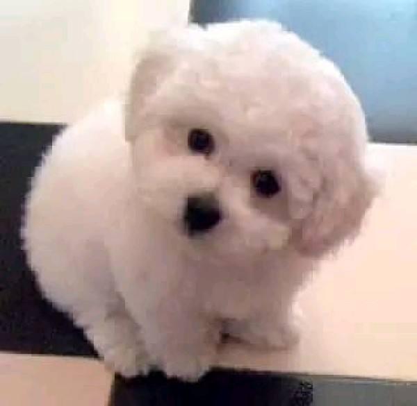 养宠知识:怎么给狗狗做日常耳道护理?