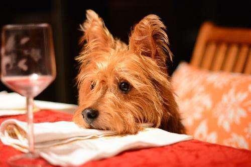 养宠知识:如何杜绝狗狗讨食行为?