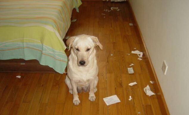 养宠知识:如何纠正狗狗乱咬东西的习惯?