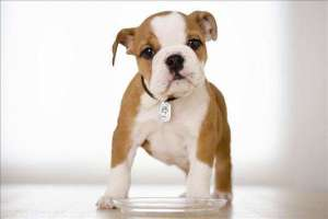 狗狗食管阻塞原因与症状?