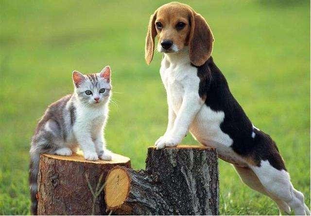 犬皮屑过多症的防治措施?