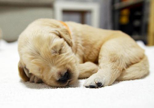 养宠知识:遛狗时如何保护狗狗的爪子?