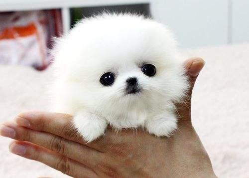 养宠知识:如何识别狗狗脱毛与掉毛?