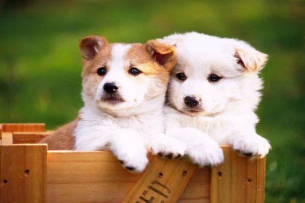 养宠知识:狗狗绝育的方法