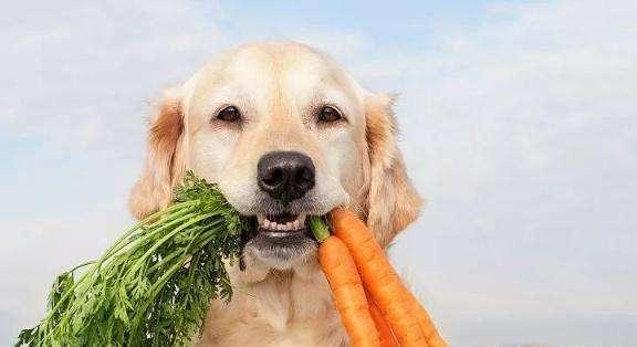 如何训练狗狗叼东西?