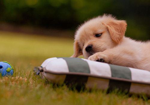 养宠知识:狗狗不同睡姿表达的意思
