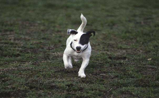 【宠物狗】帮狗狗减肥的正确方法