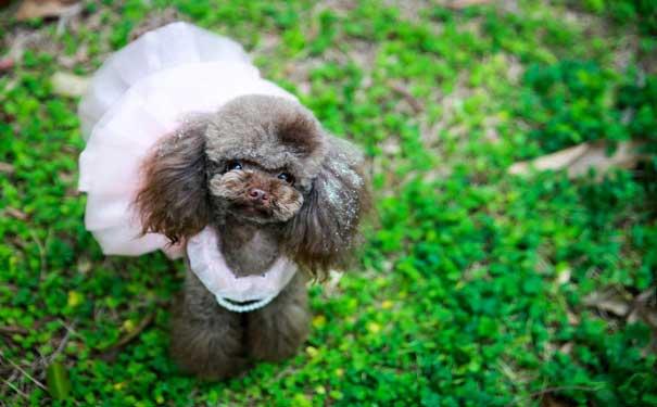 长生宠物医院什么是西高地的伪狂犬病宠物 (124).jpg