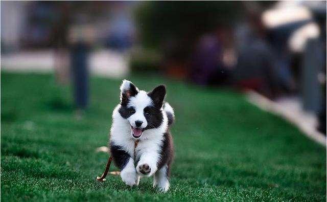 怎么为狗狗取一个好听的名字呢?