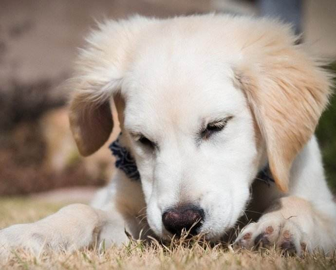 如何用狗绳有效训狗?