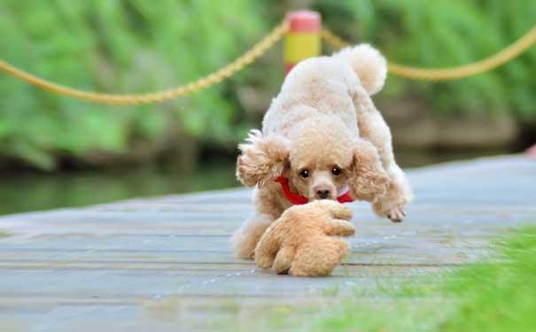一个不爱宠物的人,如何一步步迈入喜爱宠物大军