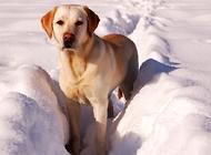 狗狗为什么口臭?需要如何防治呢