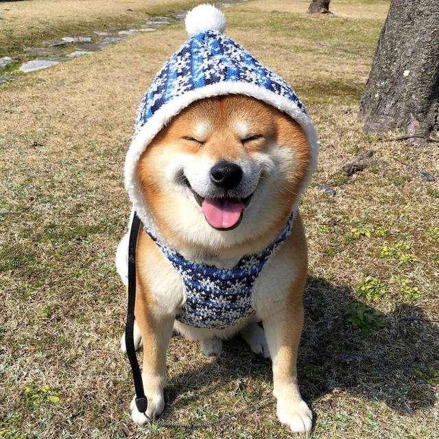 狗狗雨季必备都有哪些?