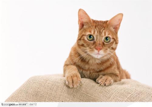 养猫需要注意的事项