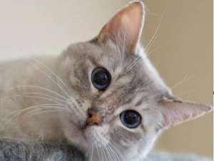 如何更好的训练猫咪上厕所的方法